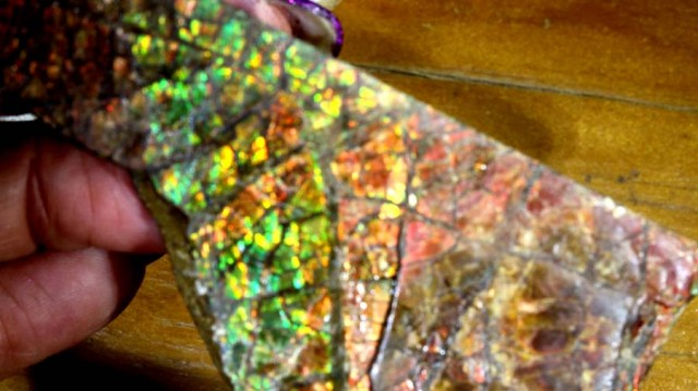 CANADIAN AMMOLITE PREFINISHED   482.85 CTS  TBG-2550