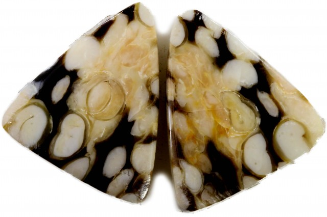 17 30 CTS PAIR RARE PEANUT WOOD FOSSIL POLISHED STONE [MGW5136]