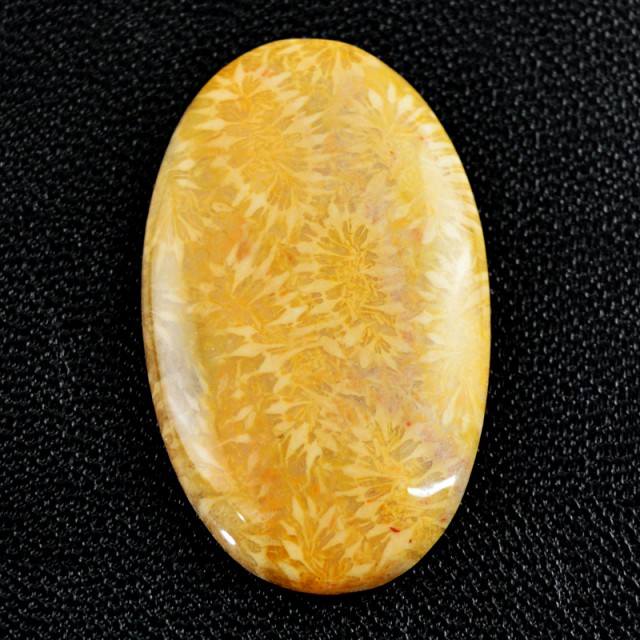 Genuine 32.50 Cts Untreated Coral Fossil Cab