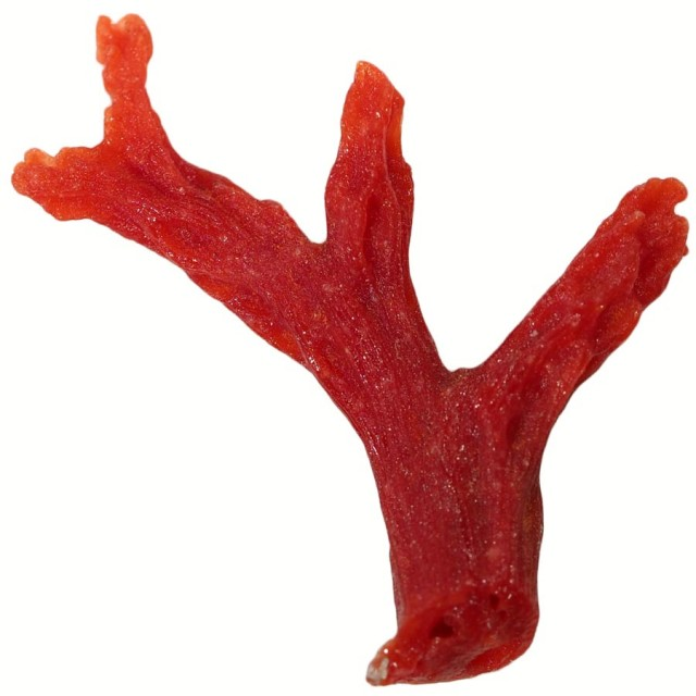 4.20 CTS RED  CORAL SPECIMEN FROM SPAIN [MGW5171]