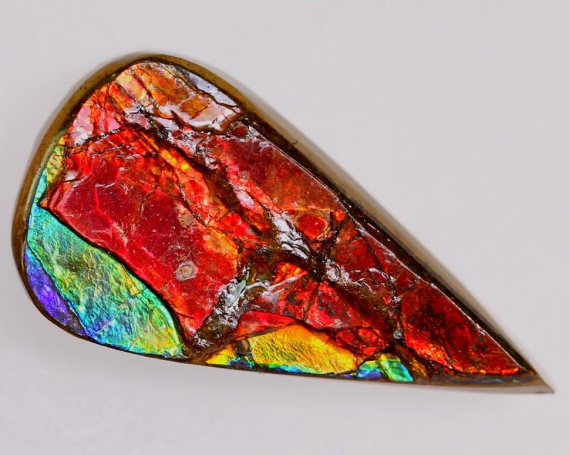 16.14Ct Natural Solid Multi Color Flash Canadian Ammolite Gems