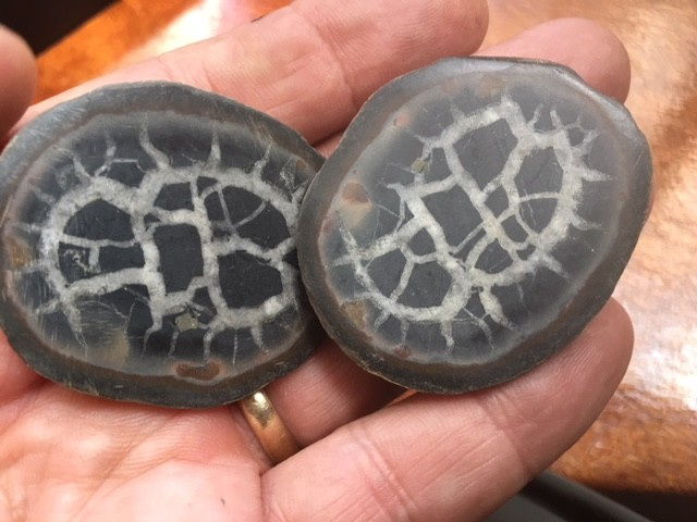 50 million year old Moroccan septarian nodule  PPP1736