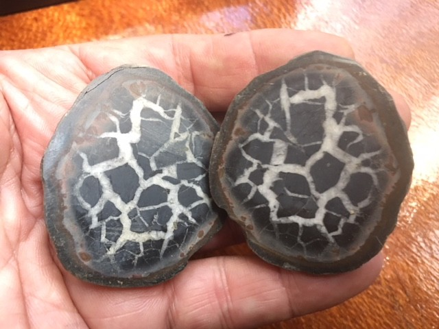 50 million year old Moroccan septarian nodule  PPP 1739