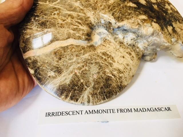 2 KILO Polished Ammonite from Madagascar