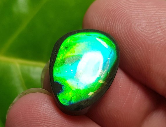 17mm Ammolite from Canada Conflict Free