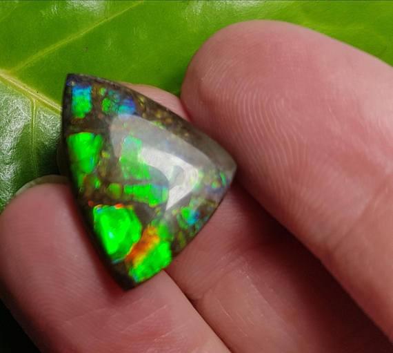 22mm Ammolite trillion designer cabochon from Alberta, Canada