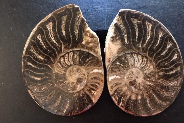 .880 Kilo Large polished Choffaticeras ammonite split Morocco SU 207