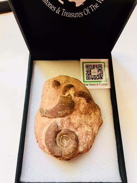 .211 kilo kilo Weathered Ammonite Specimen from Morocco SU246