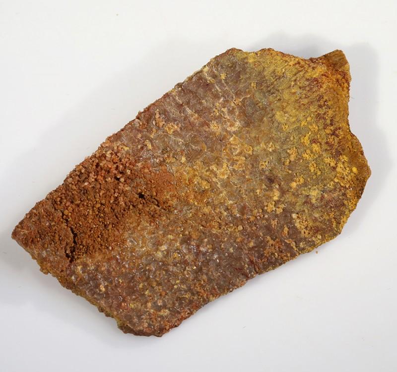 32.40Cts  Fossil Dinosaur Bone  Morocco SU 255