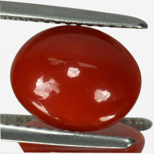 ~UNTREATED~ 2.21 Cts Natural Italian Red Coral Cabochon (10.3 x 8.2 mm)