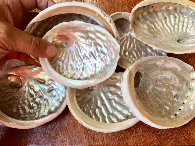 Parcel 7 Broome Abalone shells  SU714