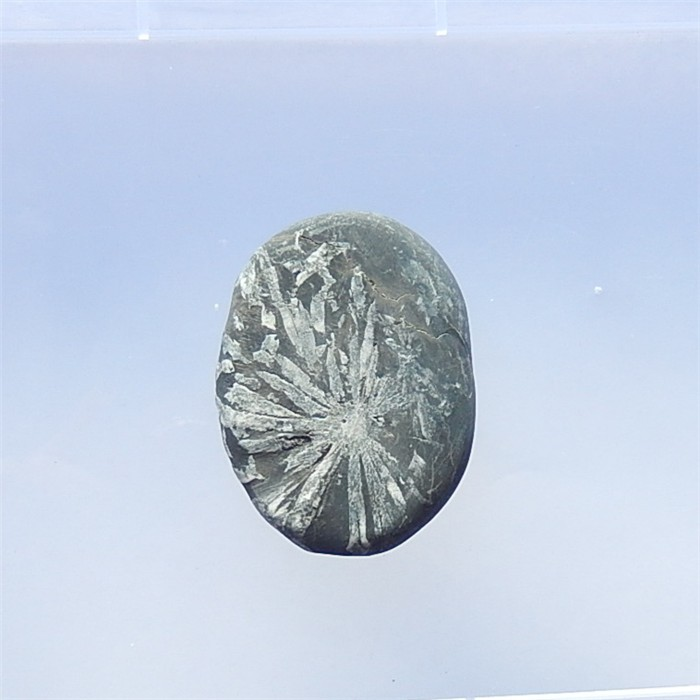 225.5ct Natural Oval cut Chrysanthemum Fossil  Pendant(18040210)