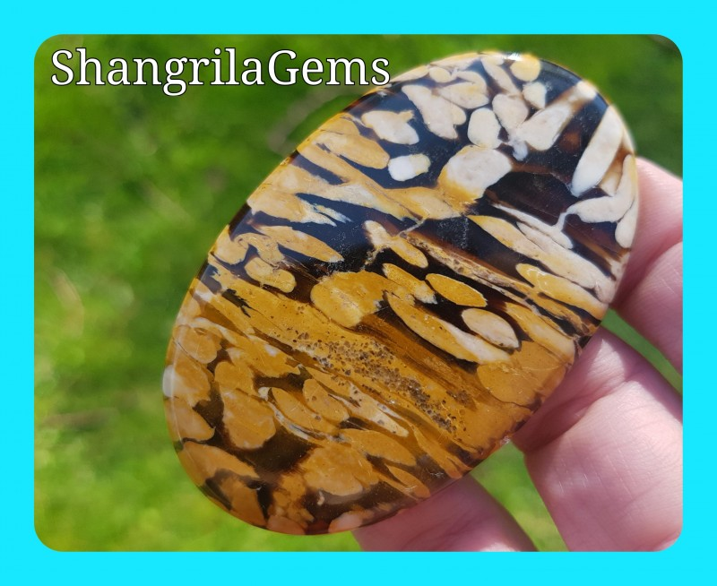 68mm Peanut wood Jasper - petrified wood cabochon 148ct