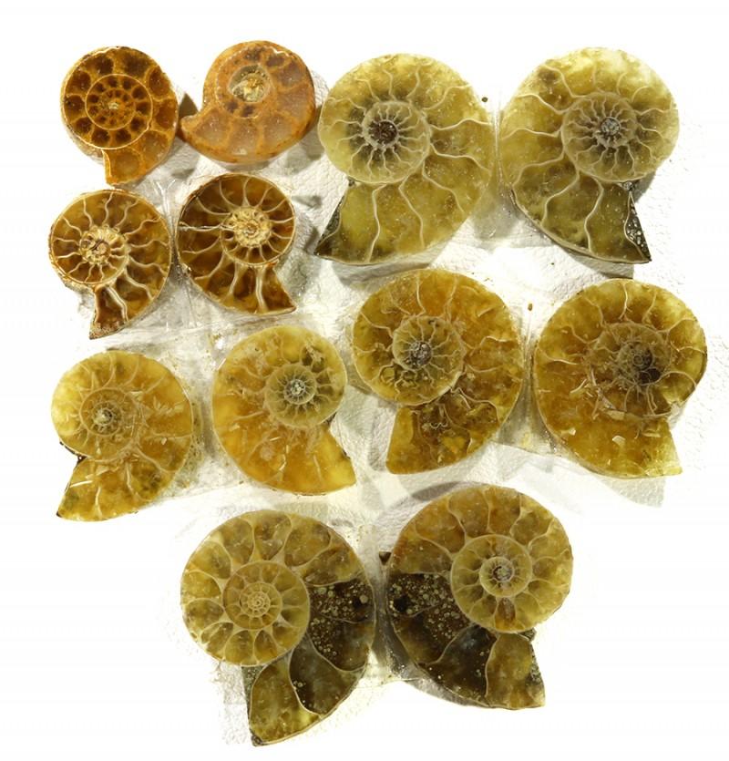 38 cts  seven  ammonite pairs GOGO 1848