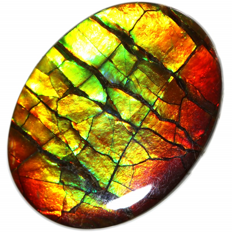 10.55 CTS AMMOLITE STONE FROM CANADA [SAFE106]