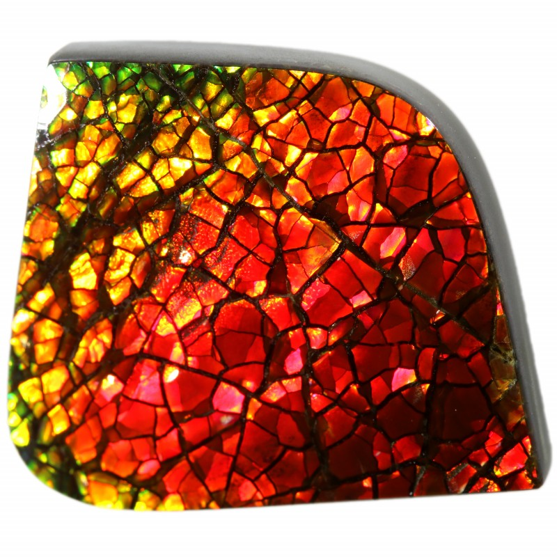 14.15 CTS AMMOLITE STONE FROM CANADA [SAFE107]