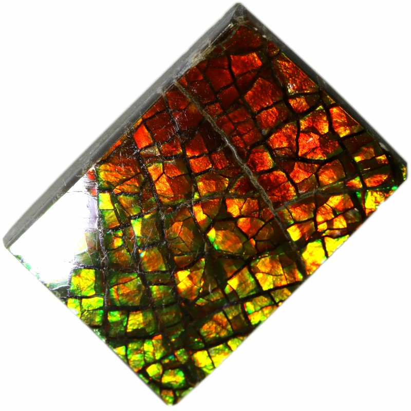 7.00 CTS AMMOLITE STONE FROM CANADA [SAFE114]