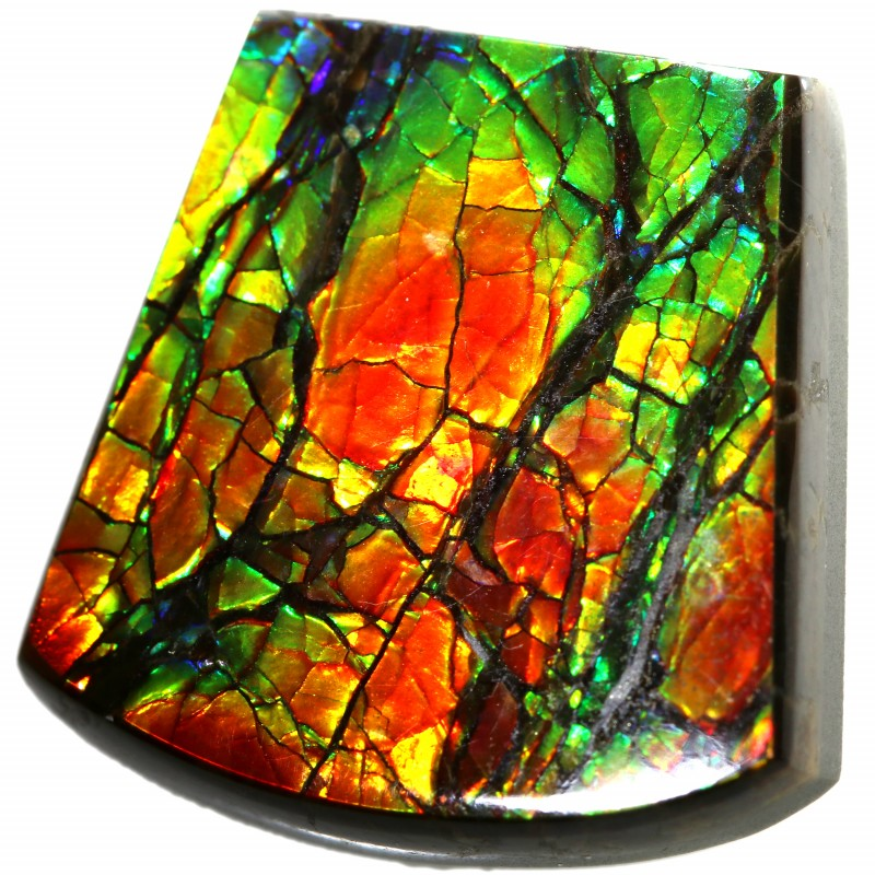14.95 CTS AMMOLITE STONE FROM CANADA [SAFE119]