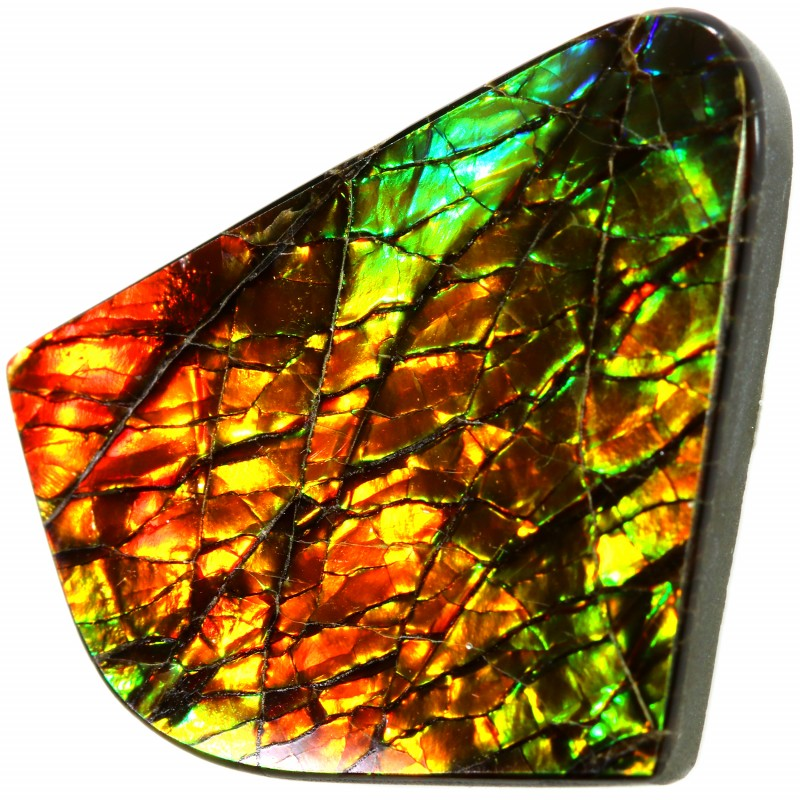 11.80 CTS AMMOLITE STONE FROM CANADA [SAFE124]