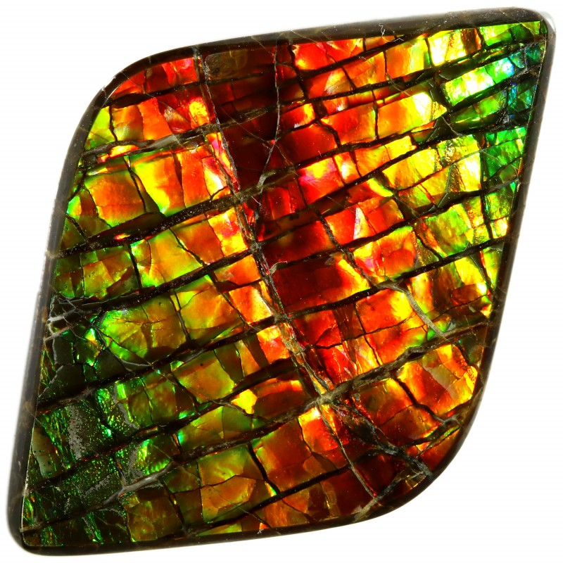 18.50 CTS AMMOLITE STONE FROM CANADA [SAFE127]