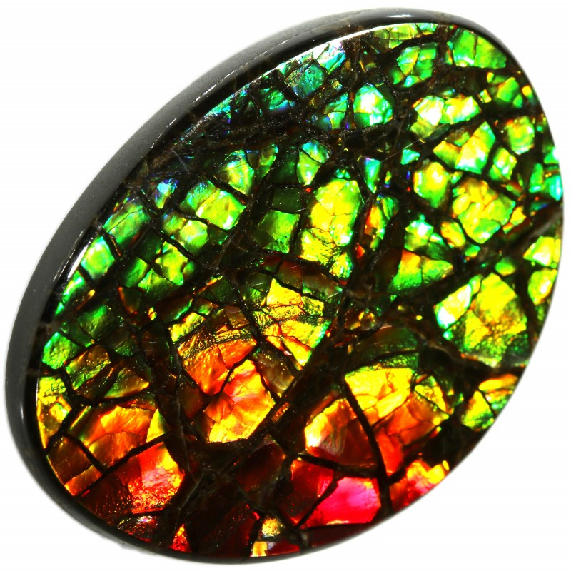 14.45 CTS AMMOLITE STONE FROM CANADA [SAFE129]
