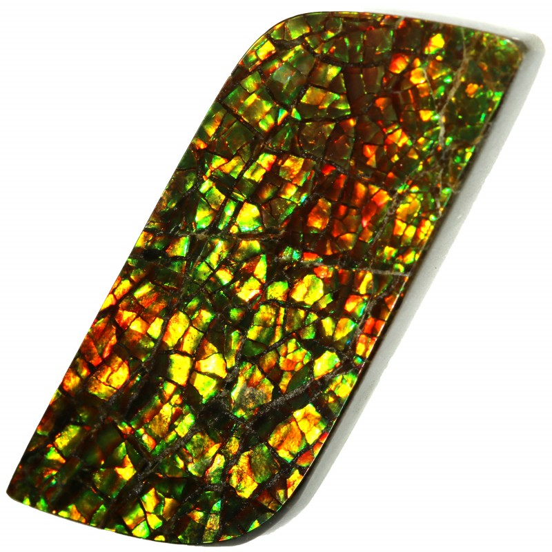 16.65 CTS AMMOLITE STONE FROM CANADA [SAFE131]