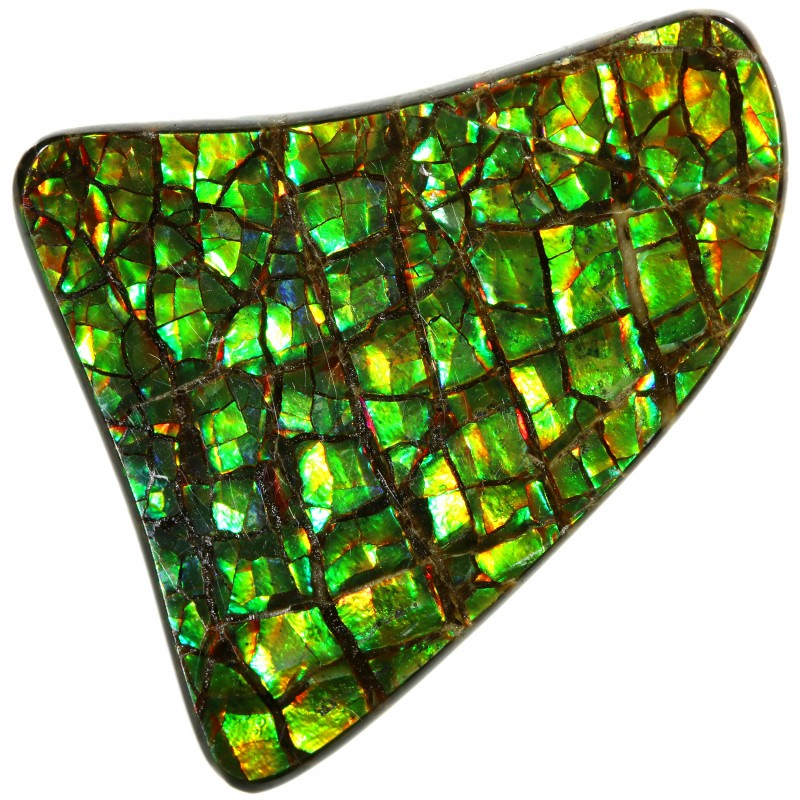 14.95 CTS AMMOLITE STONE FROM CANADA [SAFE132]