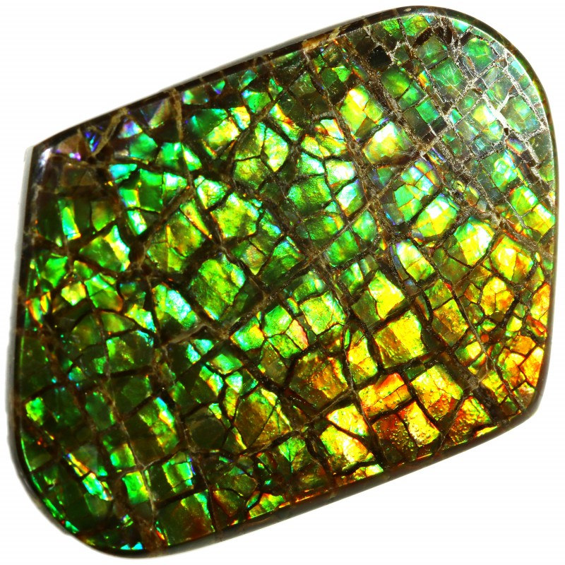 25.85 CTS AMMOLITE STONE FROM CANADA [SAFE134]