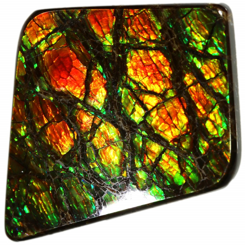 24.75 CTS AMMOLITE STONE FROM CANADA [SAFE142]