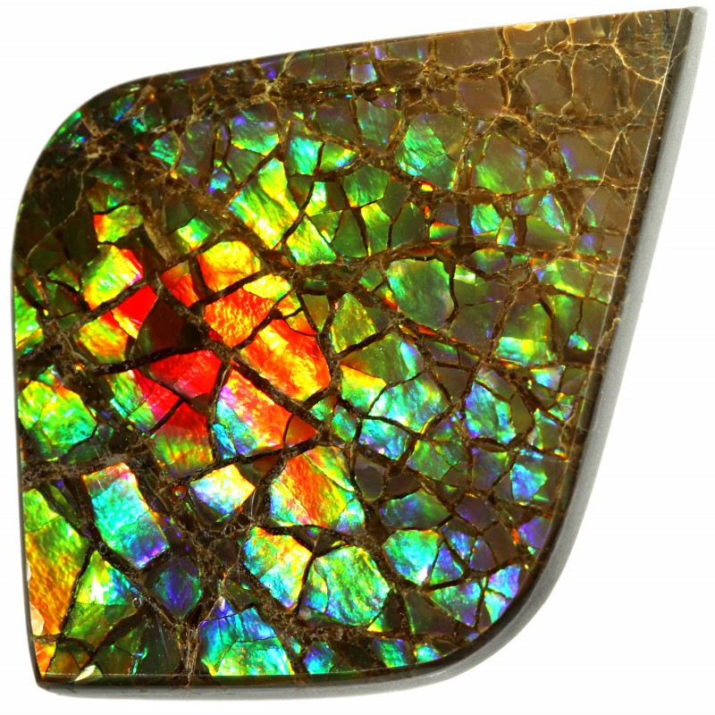 36.15 CTS AMMOLITE STONE FROM CANADA [SAFE144]