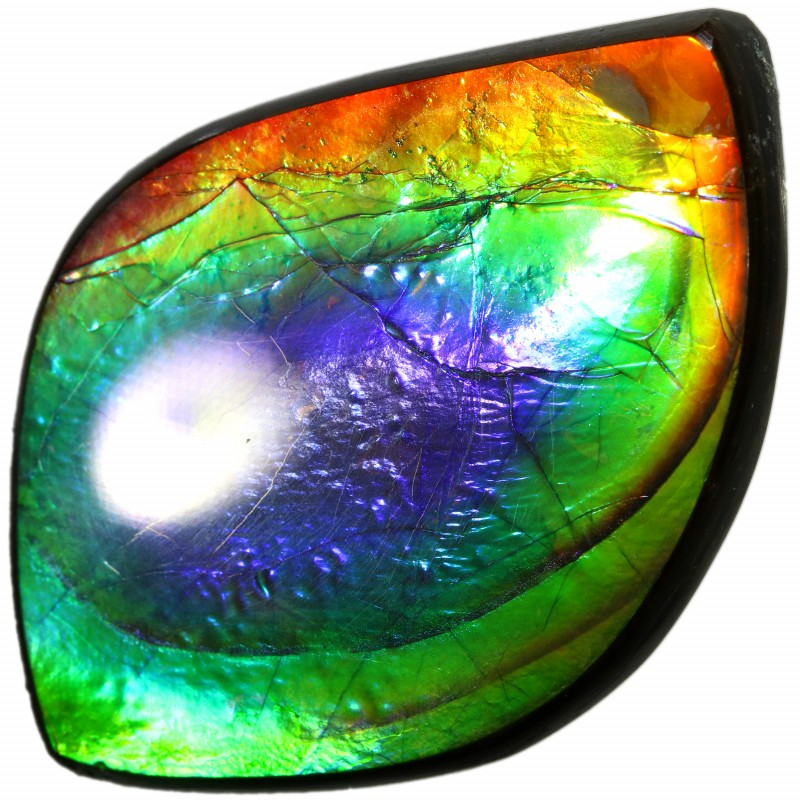 25.25 CTS AA AMMOLITE STONE FROM CANADA [SAFE145]