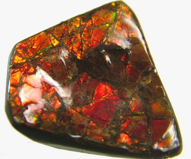 CANADIAN AMMOLITE -POLISHED- 21 CTS [S3646 ]