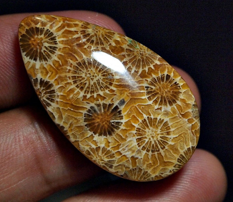 35.70CRT FOSSIL CORAL TRATAI FLOWER AGATE