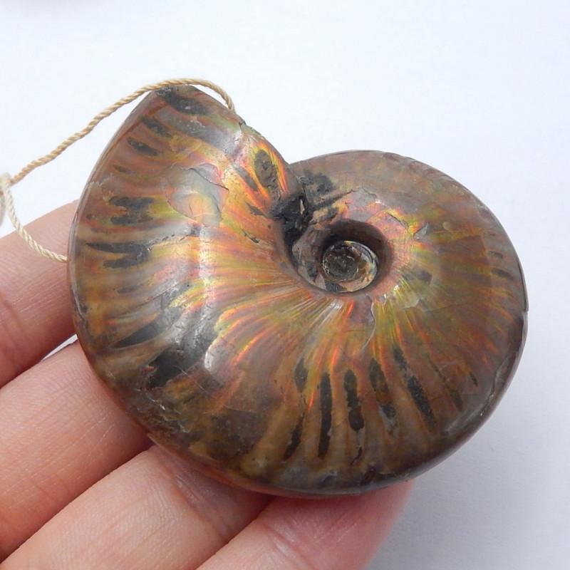 Snail shell fossil