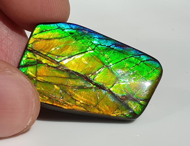 31,70ct Ammolite - Bright Colours!