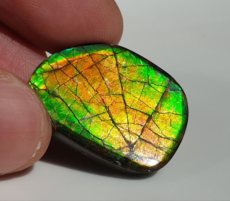 25,50ct Ammolite - Bright Colours & Dragonskin pattern!