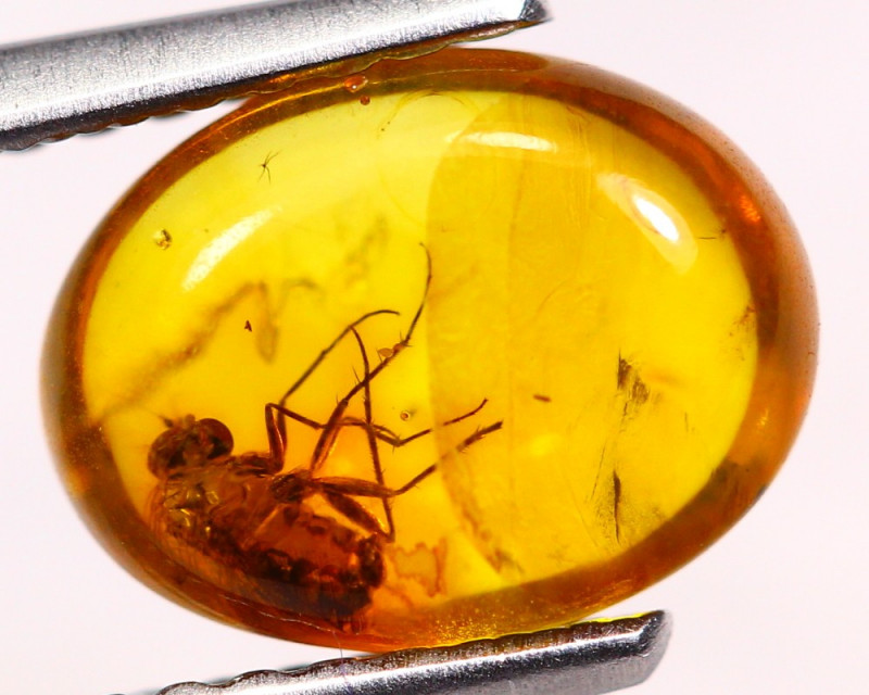 0.80cts Natural Baltic Million Years Amber / FA43