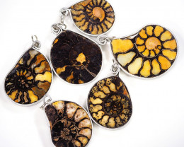 Ammonite Pendant parcel 6 pcs from Morocco WS353