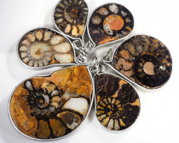 Ammonite Pendant parcel 6 pcs from Morocco WS362