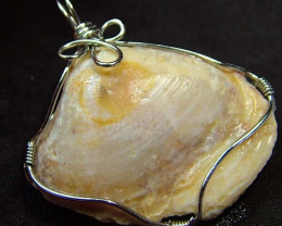 NATURAL SHELL FOSSIL PENDANT 53.50 CTS [GT732 ]
