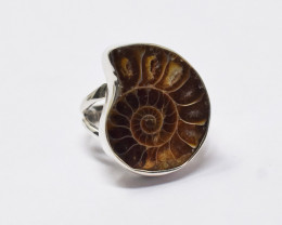 Stunning Genuine Ammonite  Ring In Silver