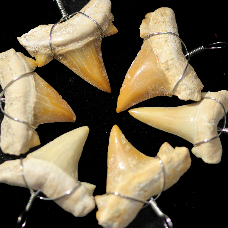 6  X MOROCCAN FOSSIL  SHARK TEETH PENDANTS BR 2539