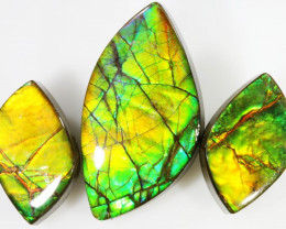 Amazing 3 natural Ammolite Gems PPP 625