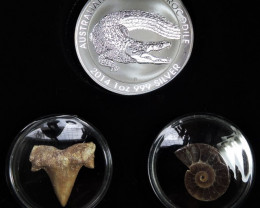 Silver Salt Crocodile with Ammonite & Shark tooth CC100