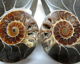 0.311 ILARGE MADAGASCAR AMMONITE SPLIT GG1462
