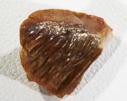 2.25Cts reptile/fish Fossil Morocco SU 284