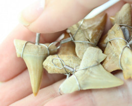 6 X MOROCCAN FOSSIL SHARK TEETH PENDANTS BR 2541