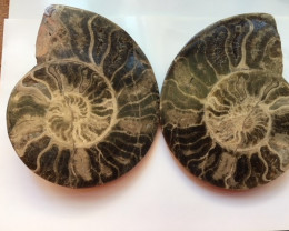 1.1 Kilo Large polished Choffaticeras ammonite split Morocco SU 208