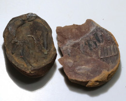 500 cts 300 Million Year old Fern Fossils  NA97