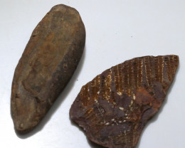 400 cts 300 Million Year old Fern Fossils  NA102